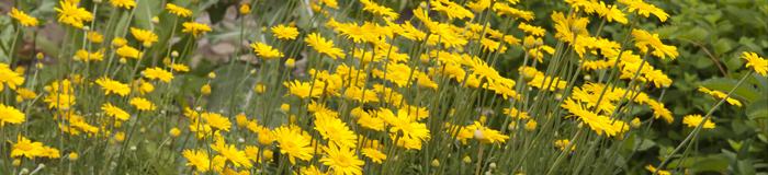 Æbeholt Klosterhave - sommer blomster