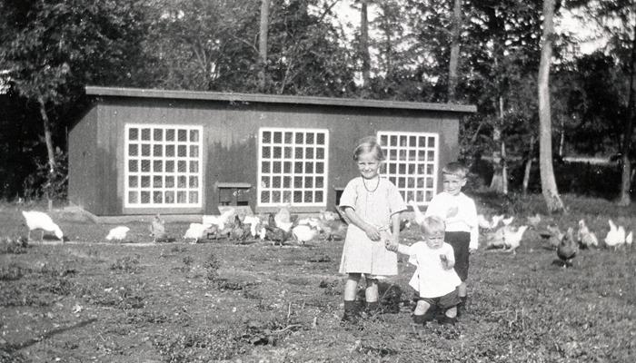 Børn og høns i haverne ved arbejderboligerne på Lundevej, 1912.