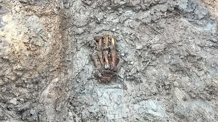 Den venstre hånd blev frilagt efter optagelsen af de øvrige knogler