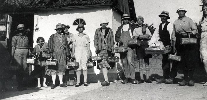 Jordbær plukkere Hørsholm, Hørsholm Lokalarkiv, 1920'erne